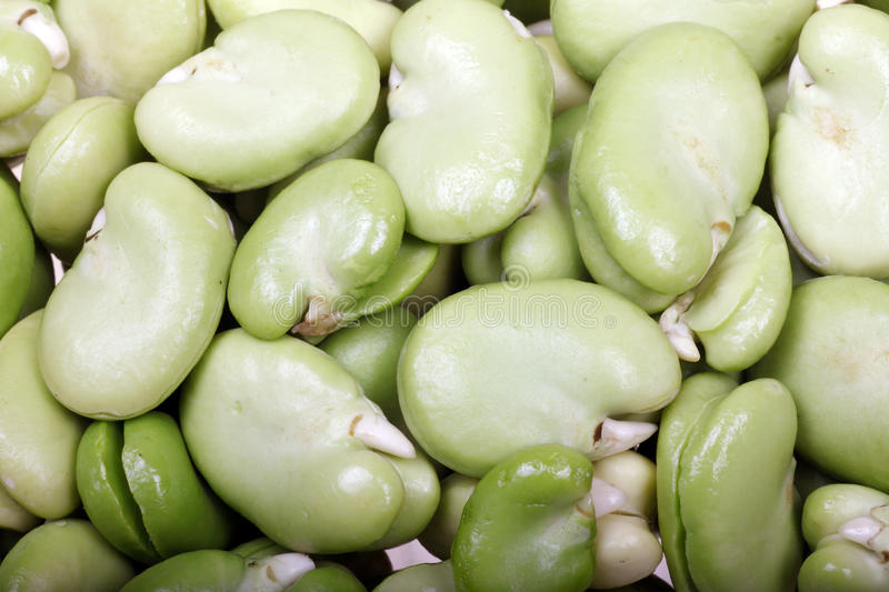 Download Broad beans stock photo. Image of eating, broad, delicious - 21199932