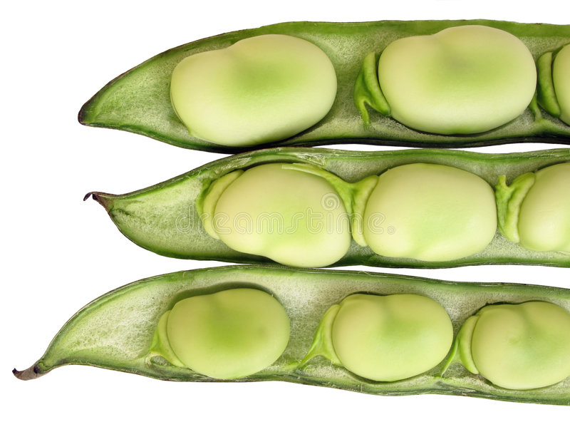 Download Broad beans stock photo. Image of botanical, clipping - 9254914