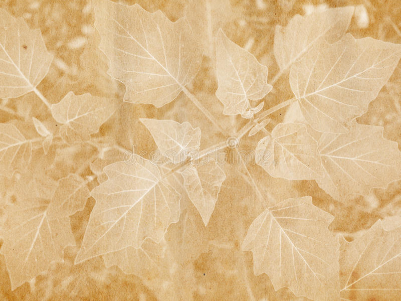 Download Broad Leaf Imprint stock photo. Image of silhouette, paper - 11517838