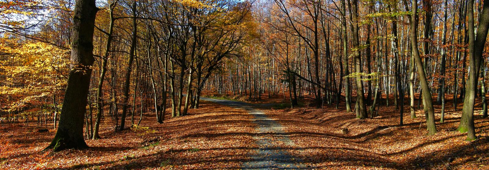 Broad leaf trees forest/woodland with gravel road at autumn afternoon daylight. Forest floor,foliage, panoramic photo. Bright colours,red, yellow. Chriby,Czech royalty free stock photos