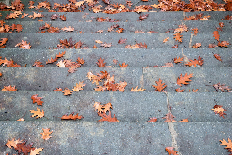 Broad stone staircase with fallen autumn leaves stock image
