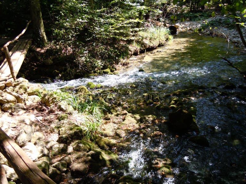 broberg över den träfloden fotografering för bildbyråer