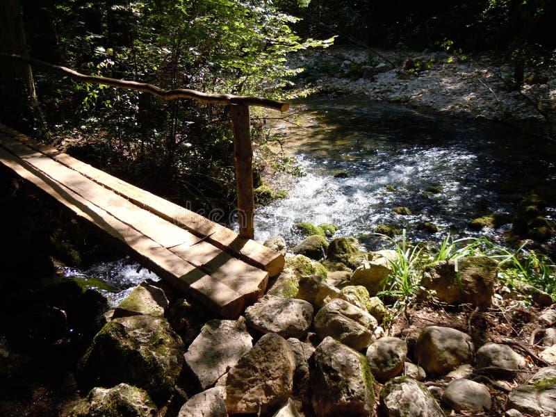 broberg över den träfloden royaltyfria bilder