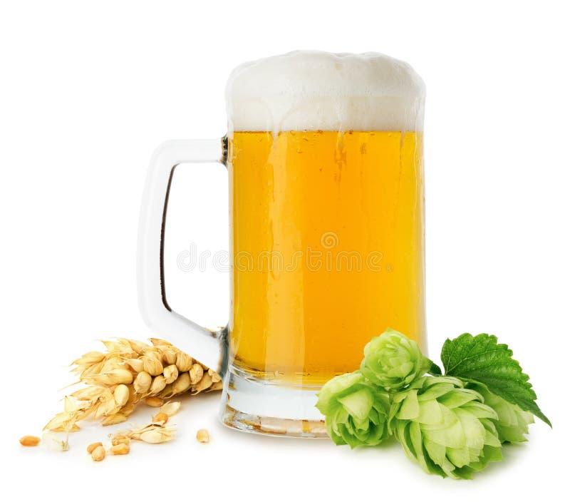 Brocca di birra con grano e di luppolo isolati sui precedenti bianchi immagini stock