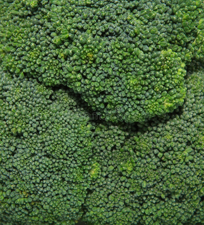 Download Broccoli stock image. Image of head, bunches, isolated - 1143171