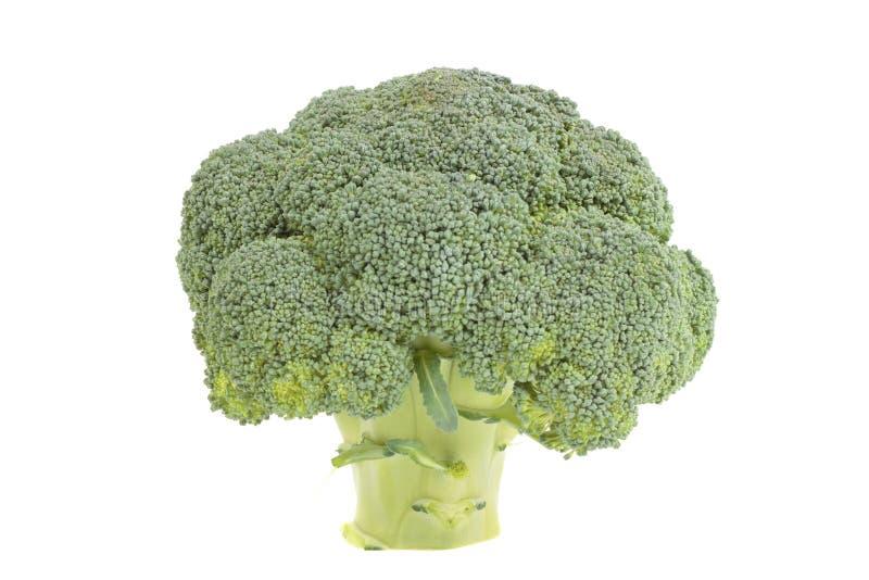 broccoli fotografering för bildbyråer