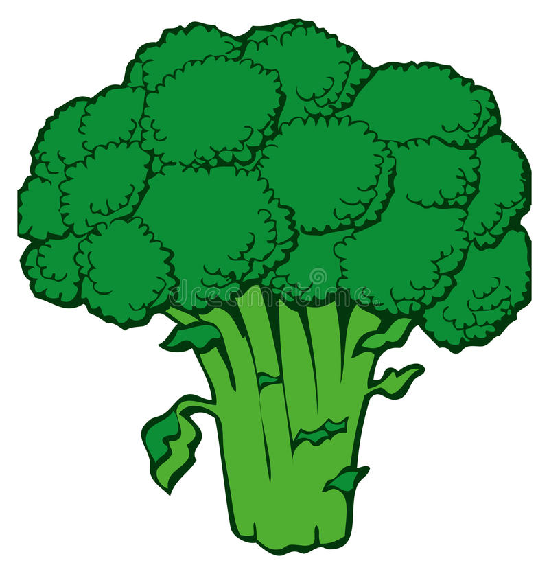 Broccoli illustration stock