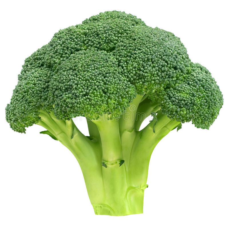Broccoli stock afbeelding