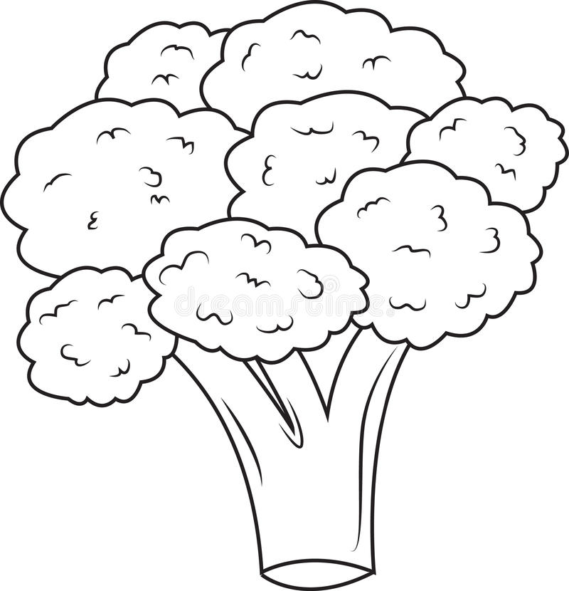 broccoli illustration de vecteur