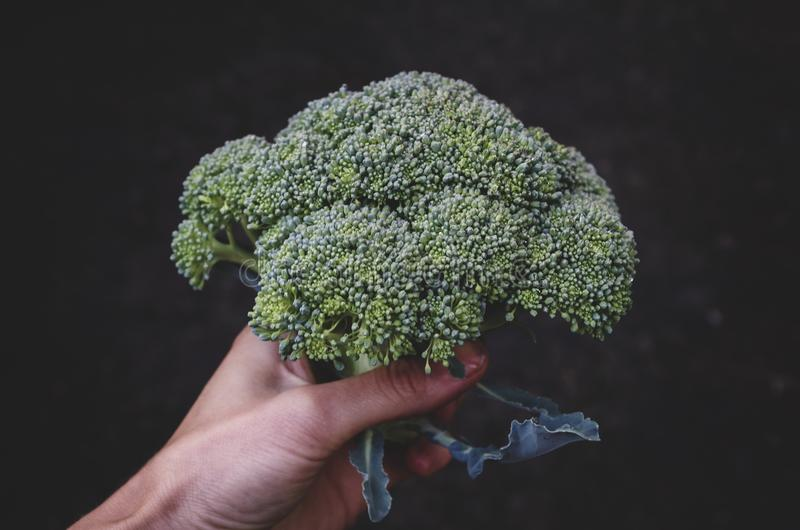 Broccoli/Calabrese royalty free stock image