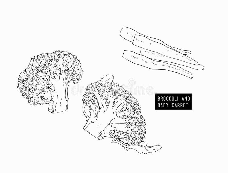 Broccoli e carota di bambino Tagliere e verdure illustrazione vettoriale