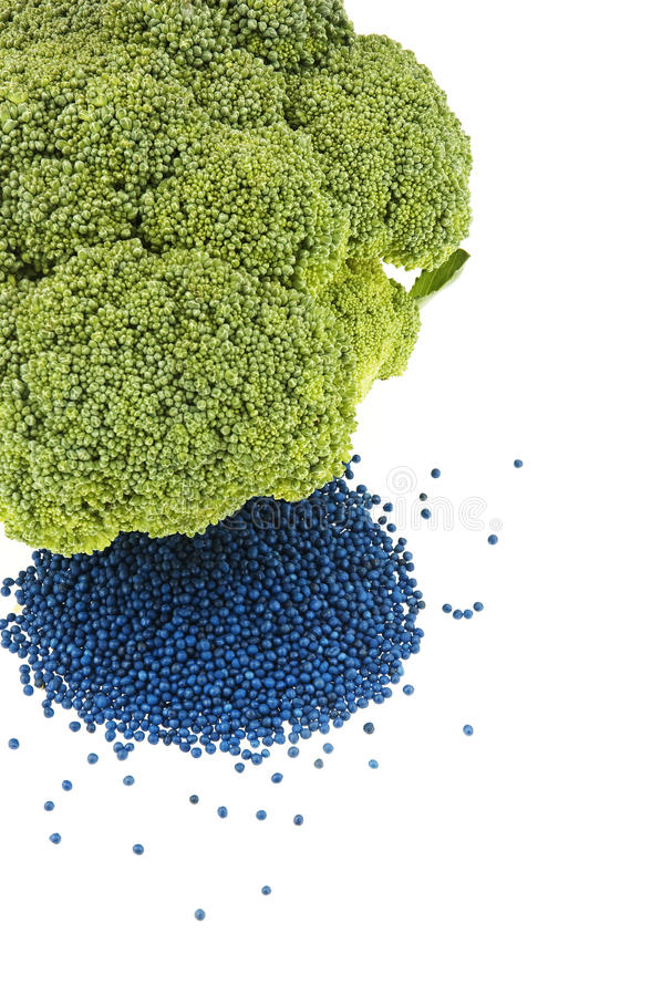 Download Broccoli floret with seed stock photo. Image of flower - 22696410