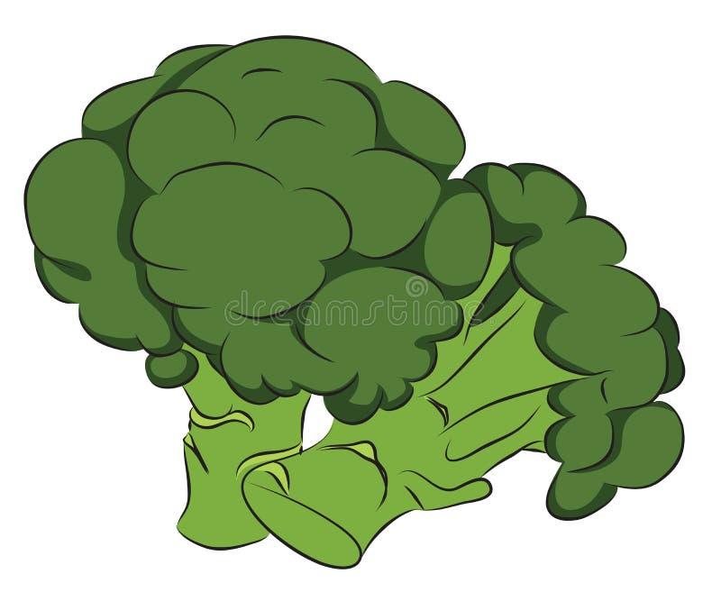 Broccoli frais illustration de vecteur