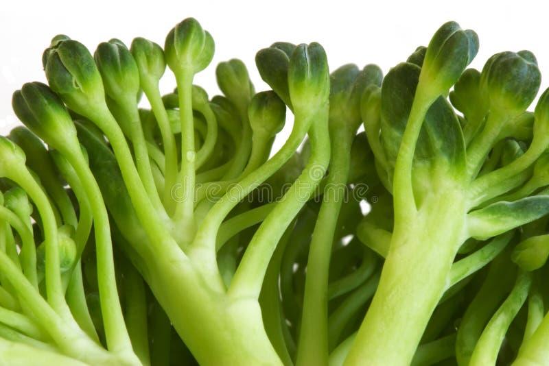Broccoli macro image. A very close image of a broccoli royalty free stock photos