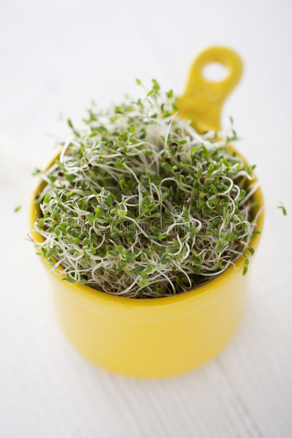 Broccoli sprouts royalty free stock photography