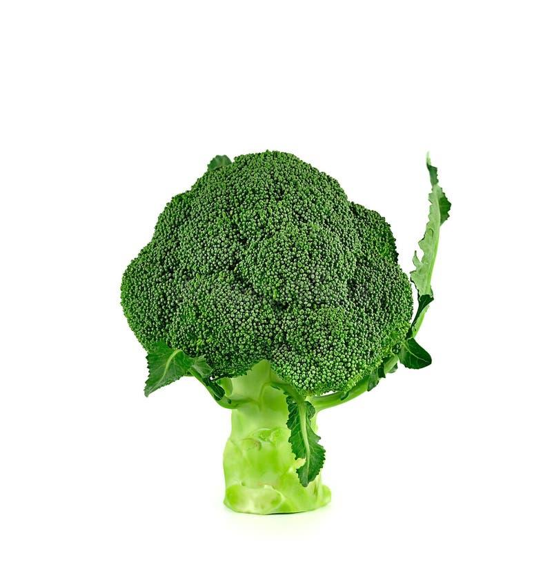 Broccoli stänger sig upp isolerat på vit bakgrund royaltyfri fotografi