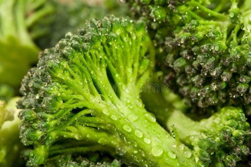 Broccoli water stock image
