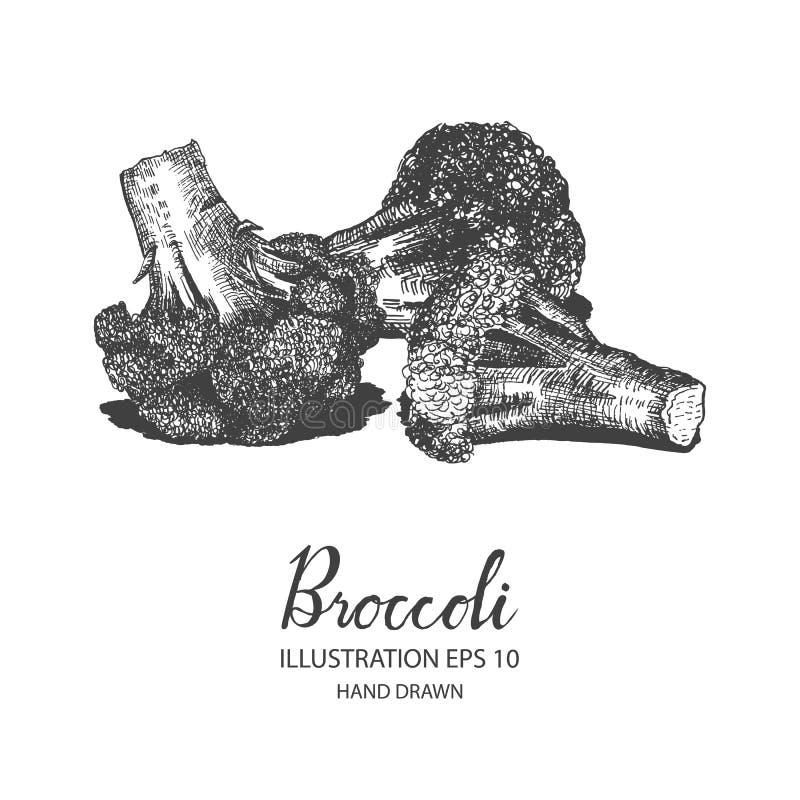 Broccolihand getrokken illustratie door inkt en penschets royalty-vrije illustratie