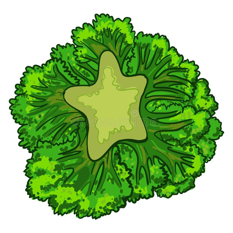 Broccolikålsymbol, tecknad filmstil stock illustrationer