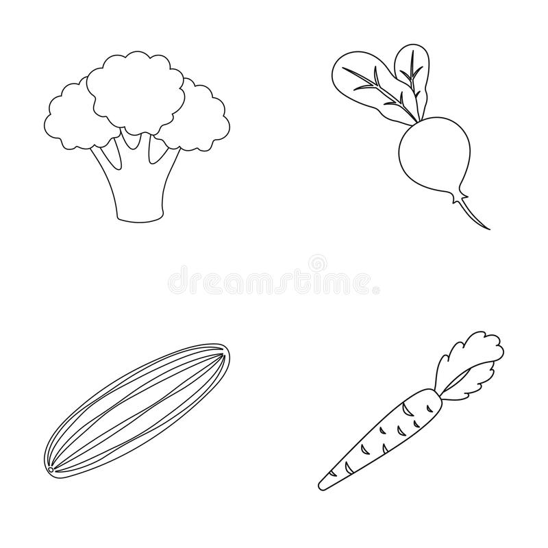 Broccolikool, radijs, komkommer, wortelen met bovenkanten Groenten geplaatst inzamelingspictogrammen in de vector van de overzich royalty-vrije illustratie