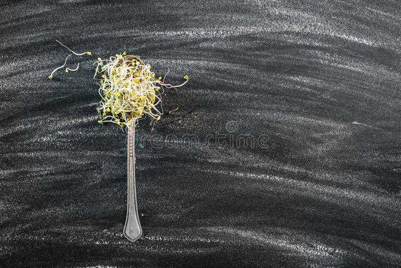 Broccolispruiten royalty-vrije stock afbeelding