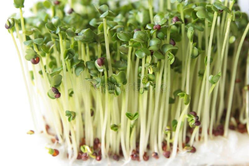 Broccolispruiten royalty-vrije stock afbeeldingen