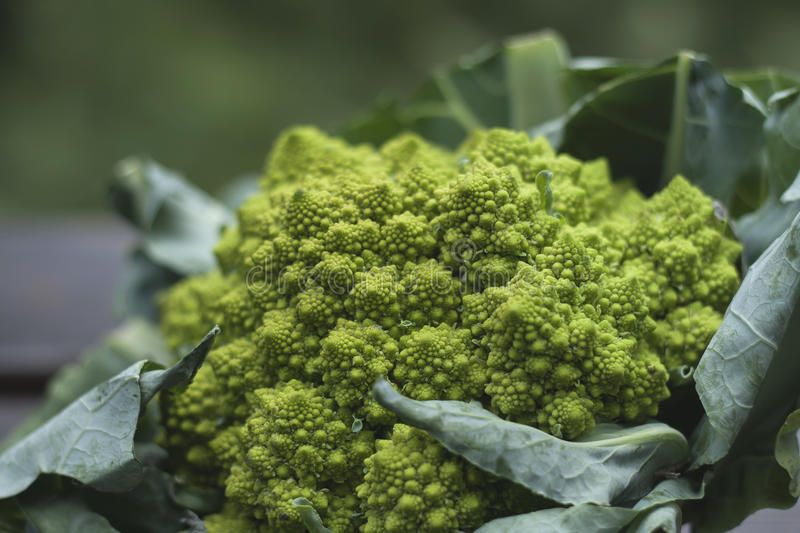 Broccolo di Romanesco immagine stock