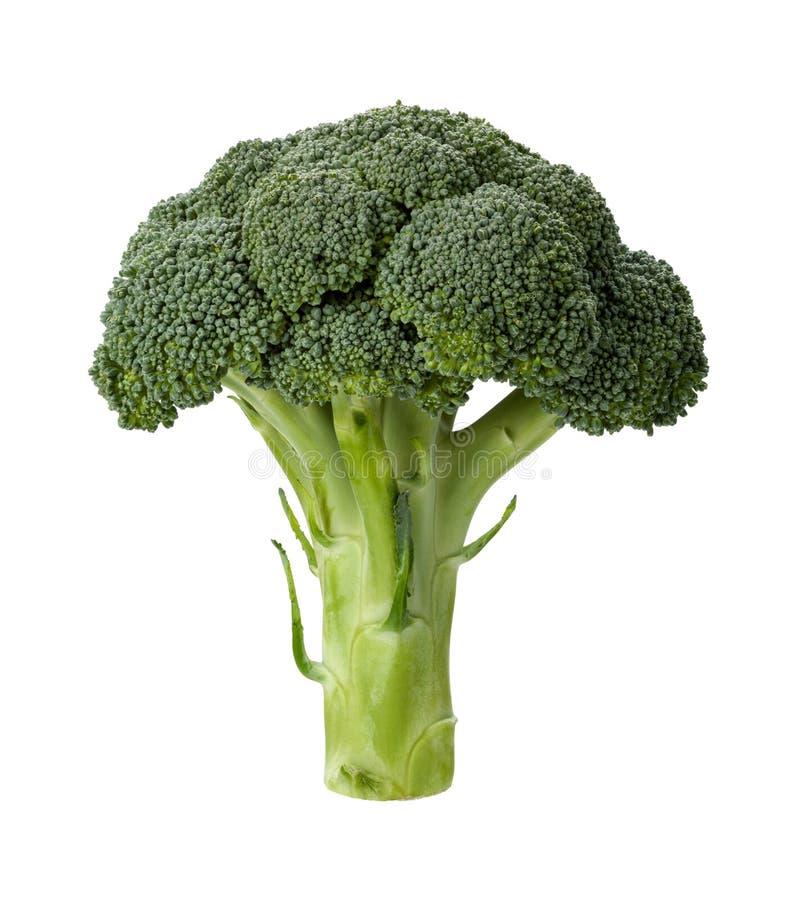 Broccolo isolato fotografia stock libera da diritti