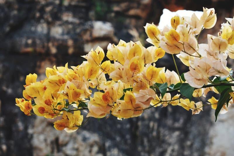 Broche de la flor colorida imagen de archivo