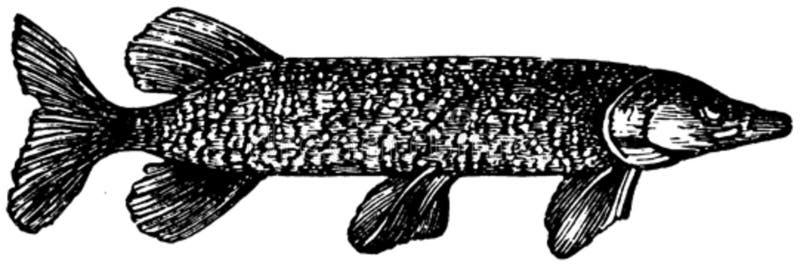 Brochet-002 Free Public Domain Cc0 Image