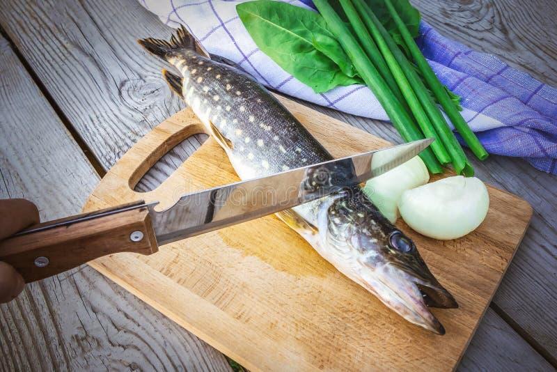 Brochet frais aux oignons et verts sur la planche ? d?couper Poisson cru pr?par? pour la cuisson photo stock