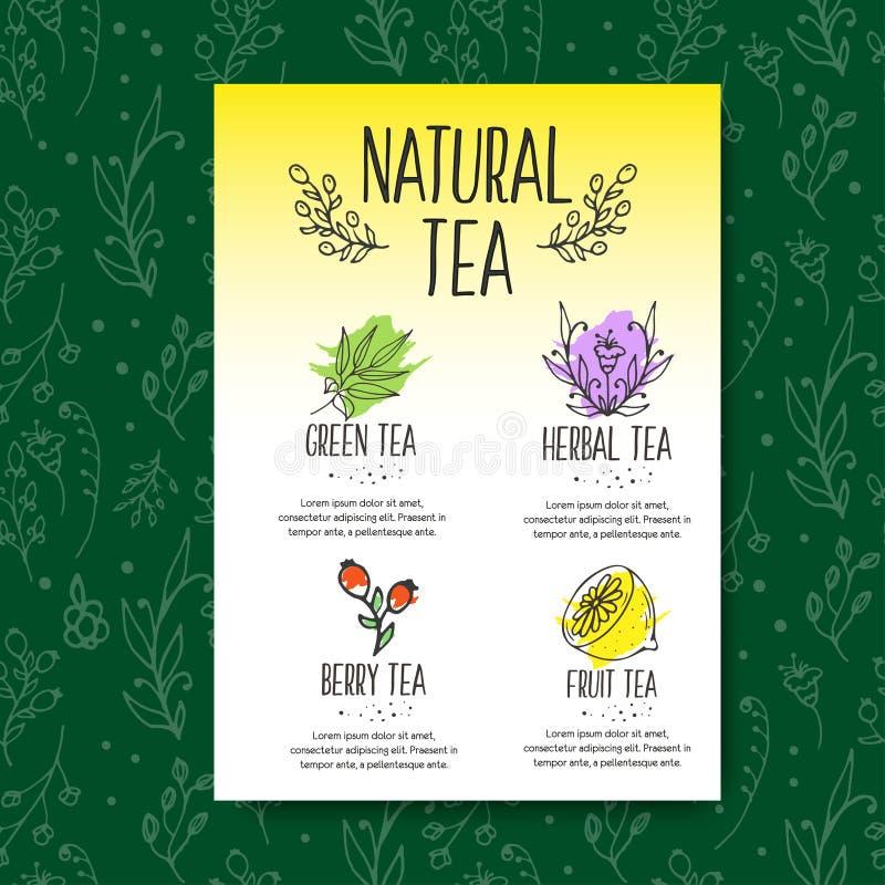 Brochure de menu de tisane Herbes organiques et fleurs sauvages La main a esquissé l'illustration de fruits et de baies illustration stock