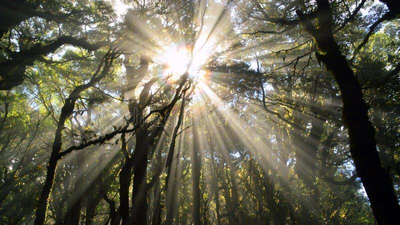 Brocken spökbild i en dimmig skog arkivbild