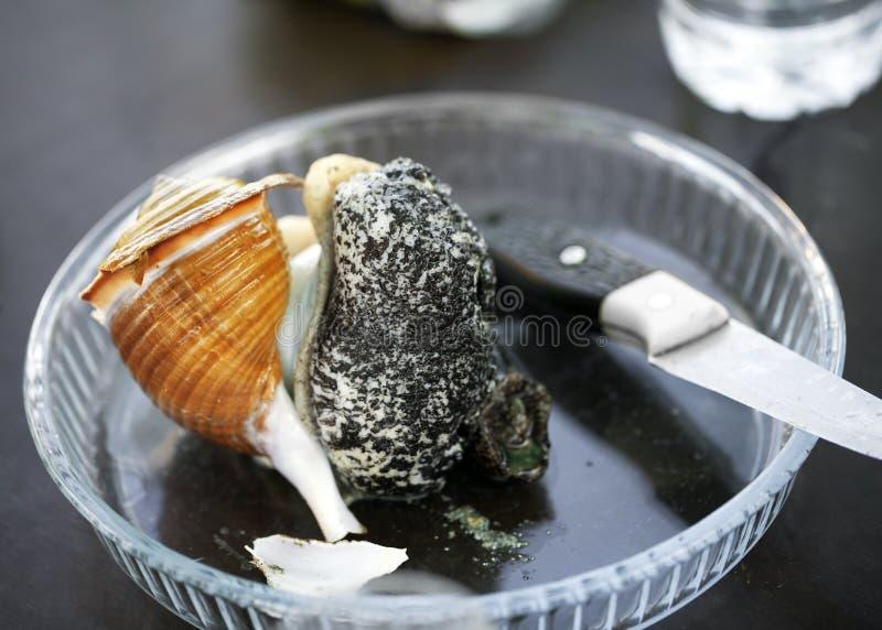 Brocken stor rå havssnigel på exponeringsglasplattan royaltyfri fotografi