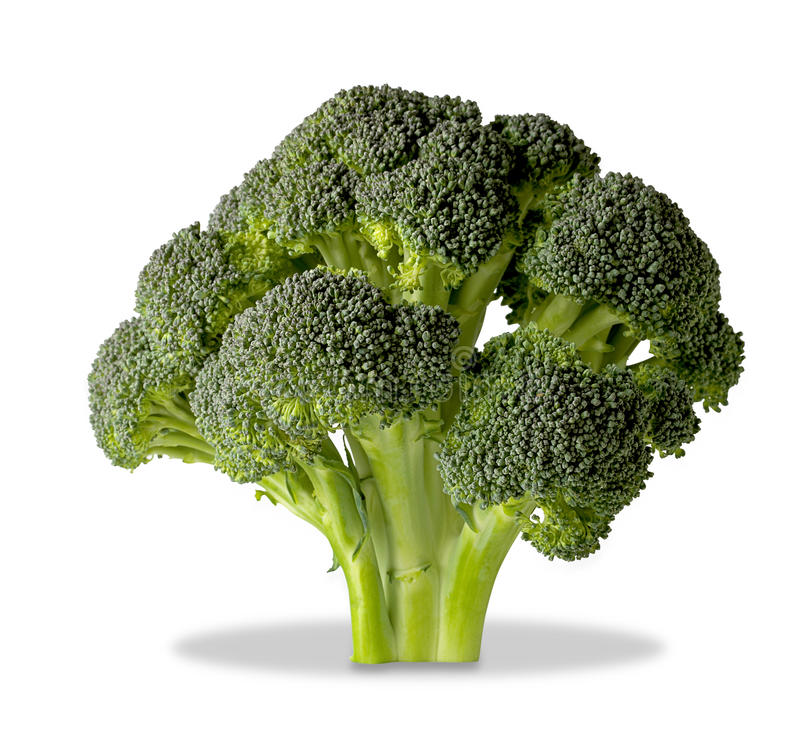 Brocolli tree on white with clipping path stock image