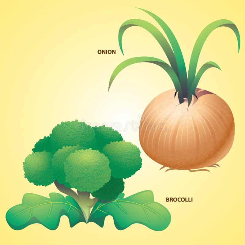 Brocollivector van de groentenui vector illustratie