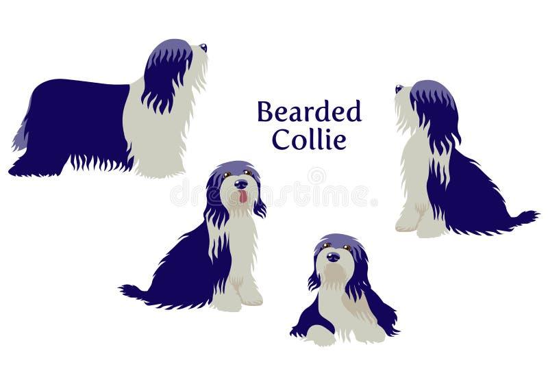 Brodaty Collie lub Tybetański Terrier ilustracji