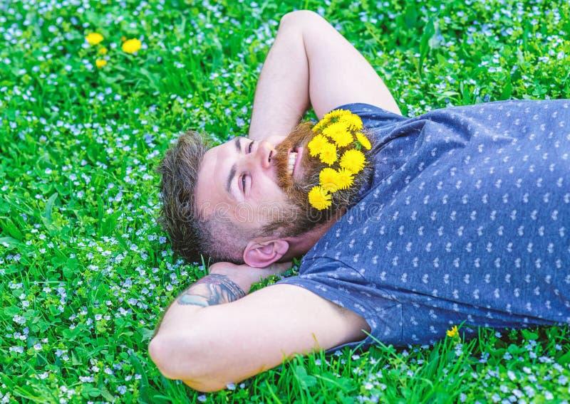 Brodaty mężczyzna z dandelion kwiatami w brodzie kłaść na łące, trawy tło Mężczyzna z brodą i wąsy na uśmiechniętej twarzy obraz royalty free