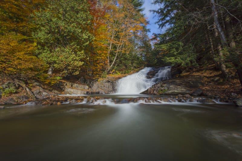 Broedplaatsdalingen in de Herfst stock fotografie