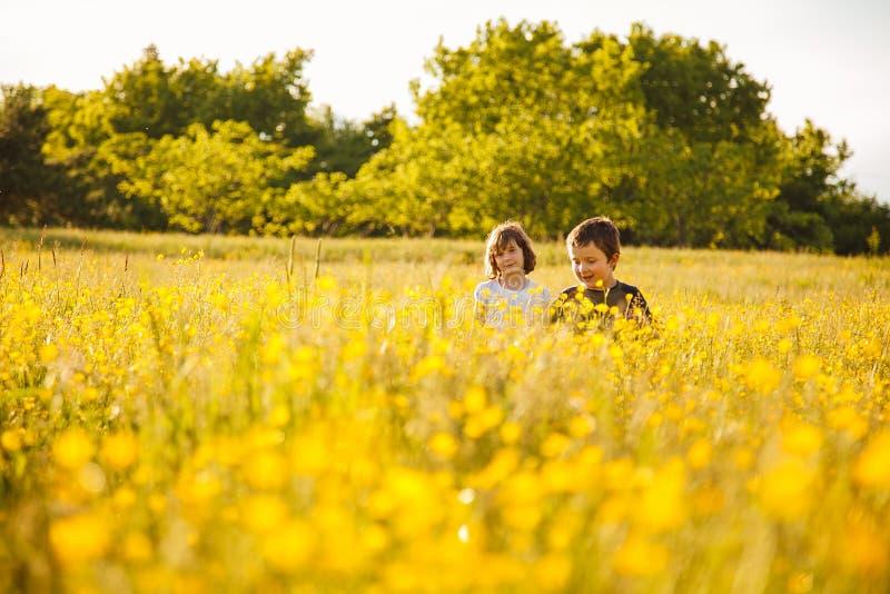 Broer en zuster op een gebied stock fotografie