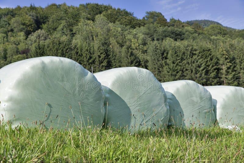 Brogować bele zbierający siano zawijający z plastikowego filmu zbliżeniem zdjęcie stock