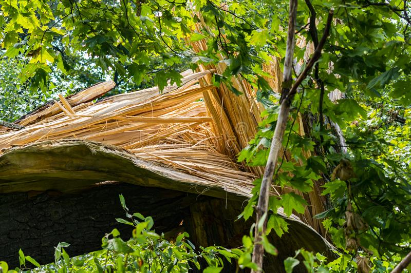 Broken big tree after a hurricane royalty free stock photography