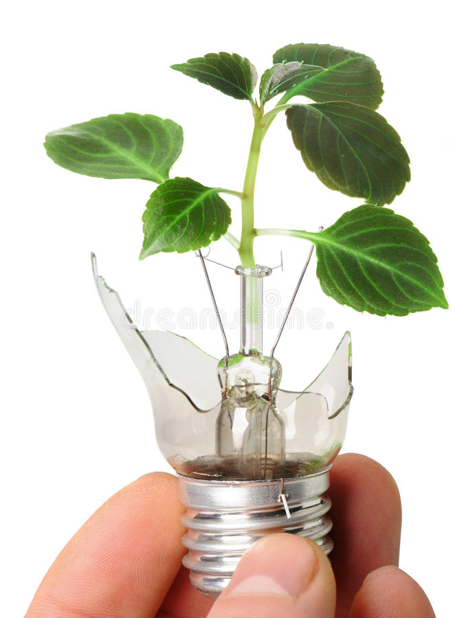 The broken bulb in a hand with a plant. Growing from it. It is isolated on a white background stock photography