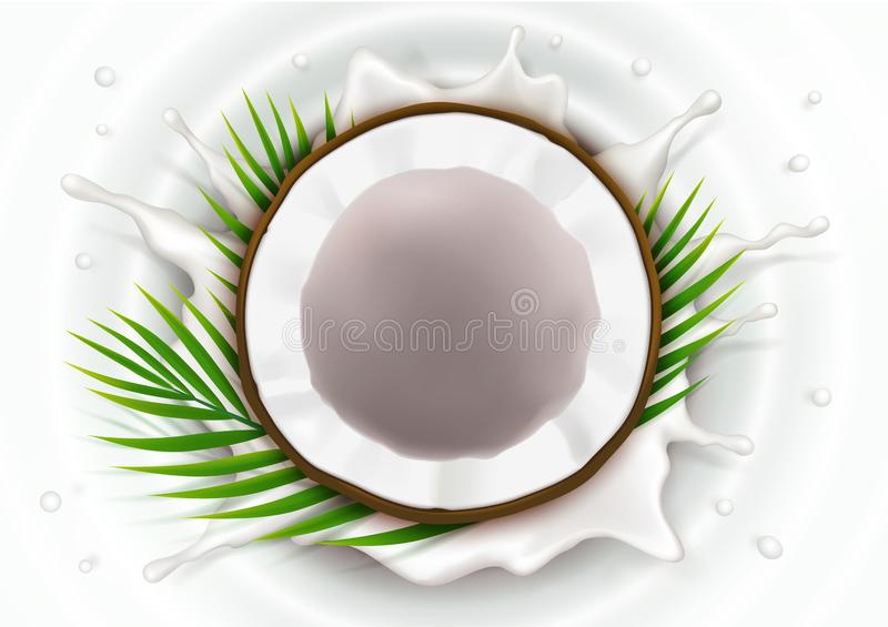 Broken coconut in milk splash. And drops realistic vector, half coco nut with green palm leaves, on white wavy background, top view. Design element for food stock illustration