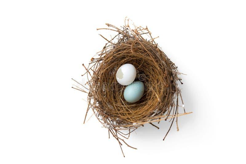 Broken eggs in bird nest stock photo