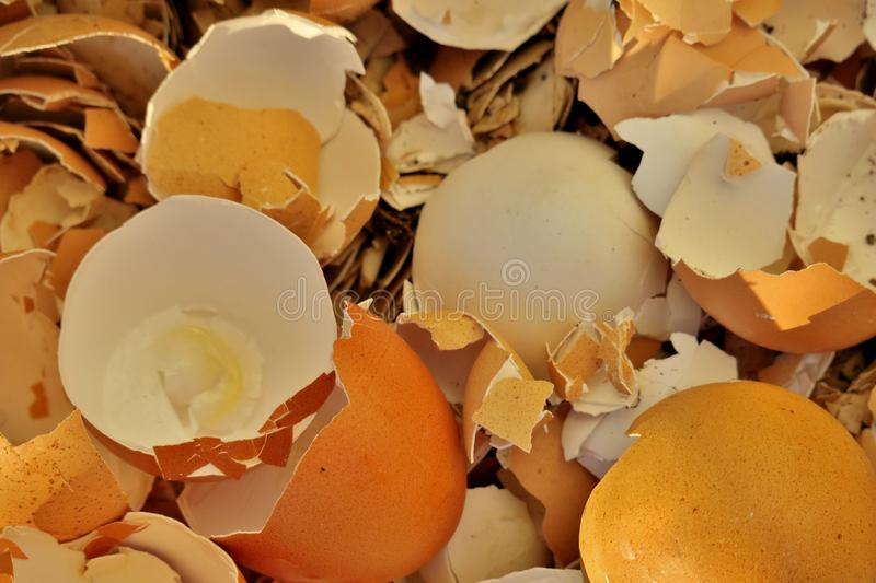 Broken eggshell after eggs close up stock photography