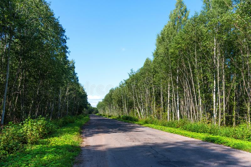 Broken empty asphalt country road surrounded by trees in sunny summer day. Road with holes in the green wood. A hole in the road stock images