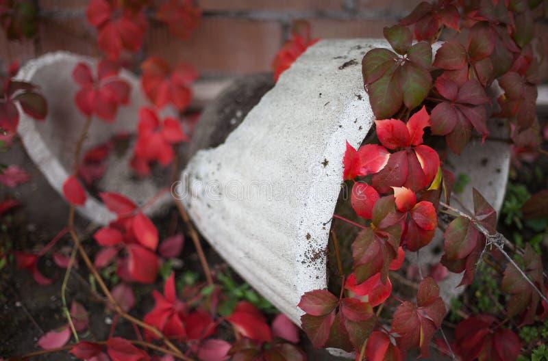 Broken flower pot. stock photos