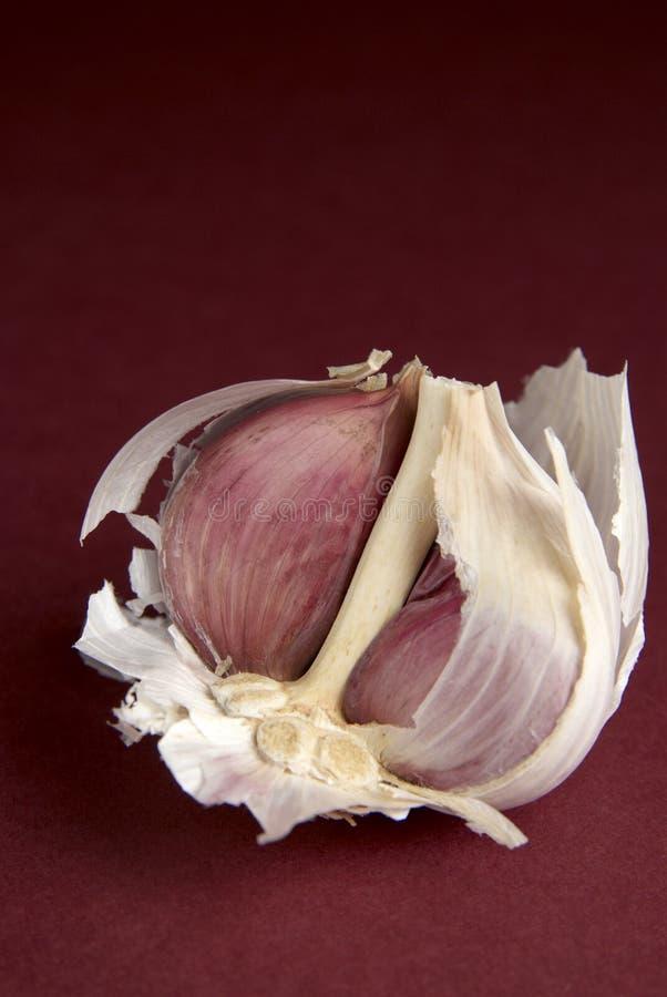 Download Broken Garlic stock photo. Image of food, gourmet, garlic - 4044598