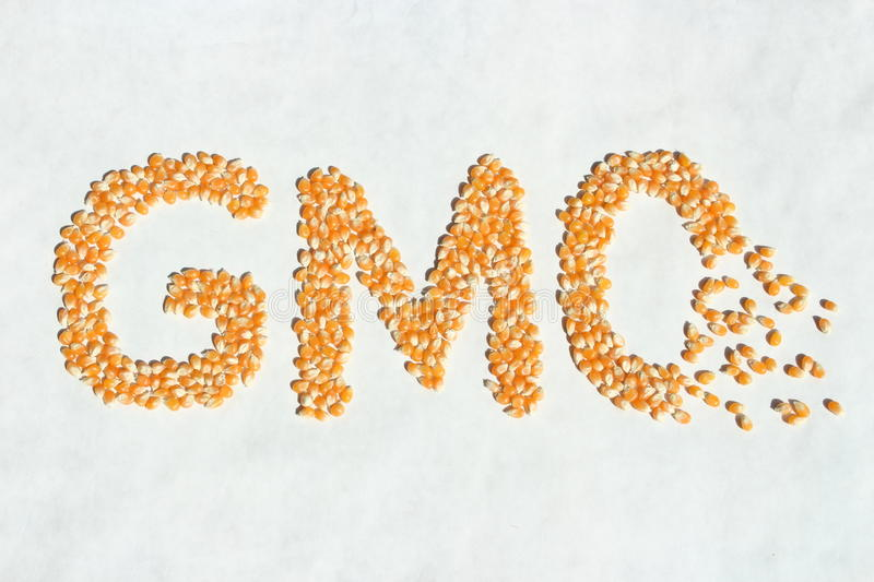 Broken GMO Corn Word stock image